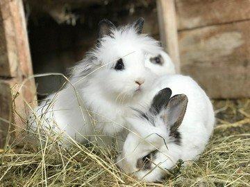 Tiere am Hof
